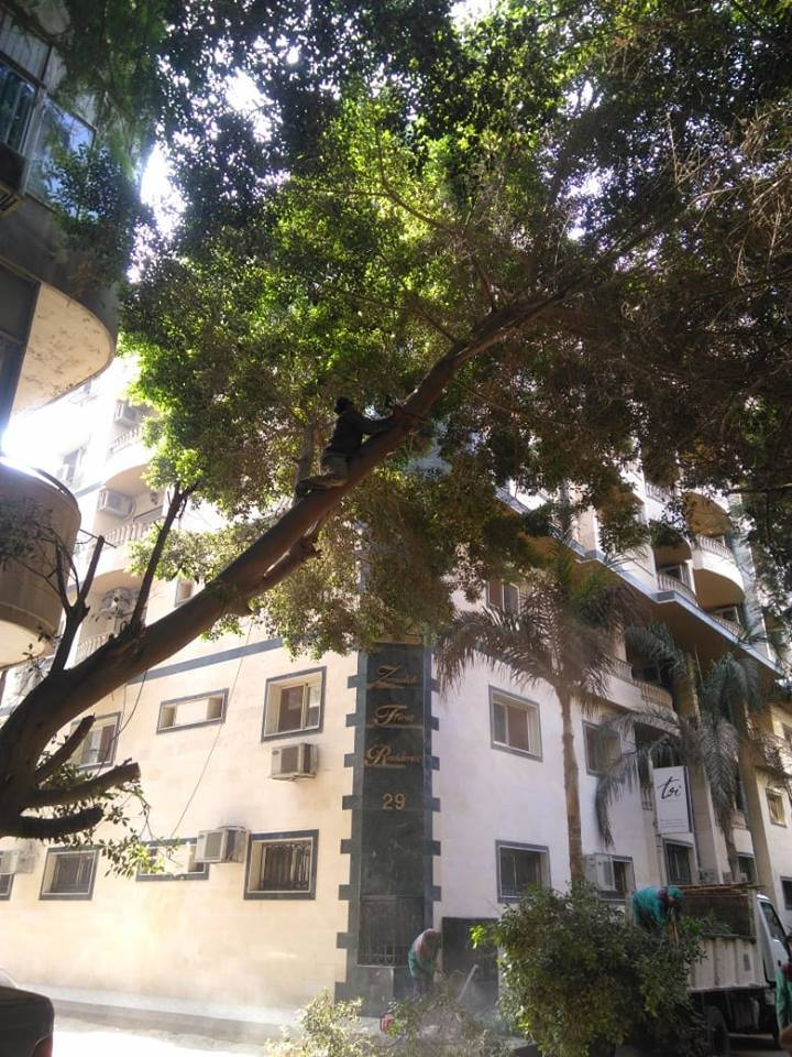 إزالة الأشجار الخطرة