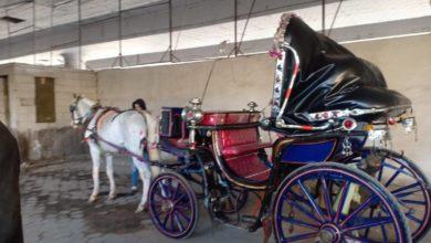 القبض على حصان لمخالفته خط السير